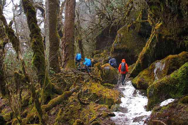 Das letzte Stück des Abstieges vom Dobato-Pass hinunter in das Hinku-Tal nach Korthe führt durch einen der eindrucksvollsten Bergurwälder, die ich je sah.