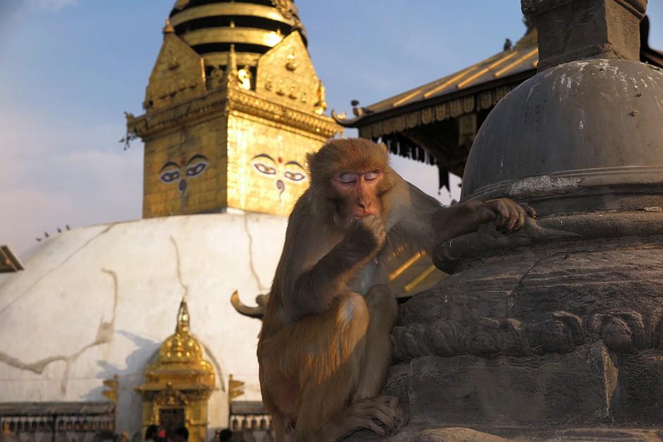 Swayambunath wird auch der Affentempel genannt. Der Grund ist klar. Hier oben hält man seine Kamera besser gut fest.