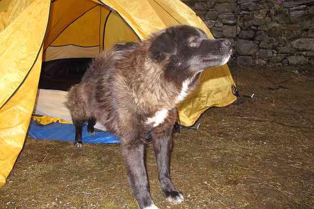 """Diese sehr süße Hundedame hatte sich Sven und Ronny um die Pfote gewickelt und durfte dann in Khote sogar in ihrem Zelt übernachten. Sven hatte wohl sein Herz an sie verloren. Wir tauften sie """"Mera""""."""